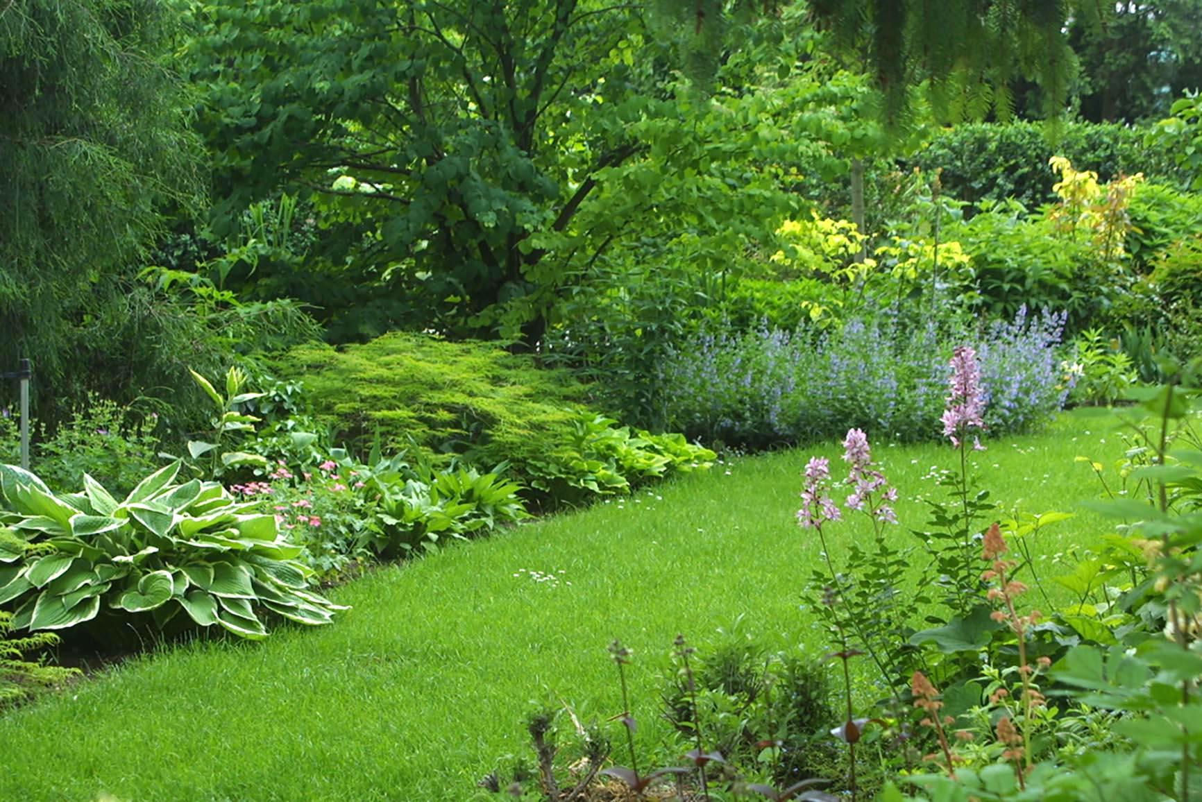 Gaerten die vorwigend schattig sind benoetigen entsprechendes Pflanzenwissen